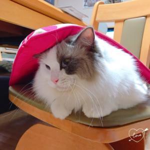 猫猫GIJINGA展