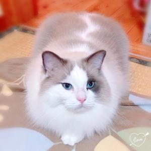 猫の手相!