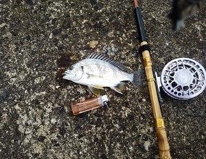 太刀魚釣り行けませんでした!