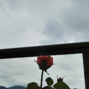 秋らしい花を愛で、ターファーを気にする骨無し女