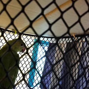 鳥見つけた