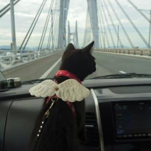 炊飯器猫、海を渡る