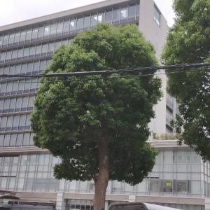 加古川総合庁舎食堂/A定食(鶏肉とキャベツのザーサイ胡麻だれ)/510円