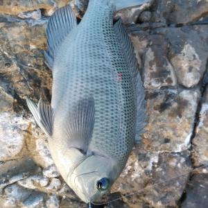shvaの釣り日記 №128