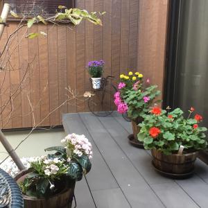 中庭の花達