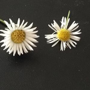 足もとの花