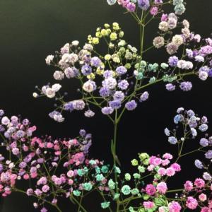 かすみ草-色・色々