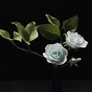 久々の薔薇