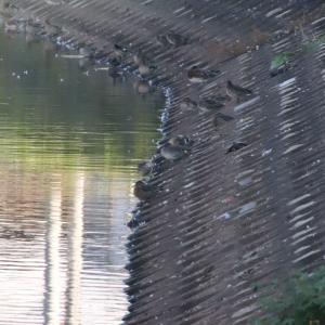 26日の池巡り