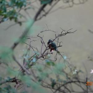 自然観察の森へ
