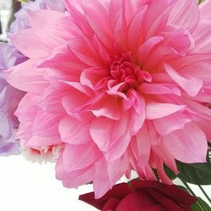 近所のお花屋さんで見事なダリアの入った花束が 1000円♪見つけた瞬間( ☆∀☆)...