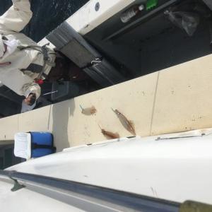 洲崎沖のヤリイカ浅くて魚信ははっきりもバレやすい