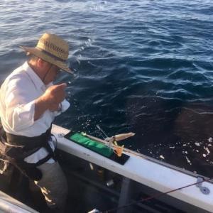 面白いですよ。マルイカ釣り。