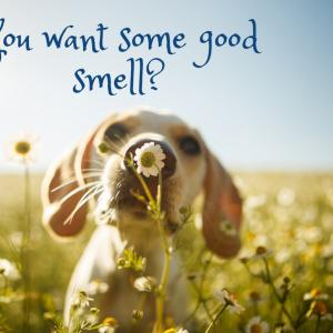 アロマ師が香害について考える