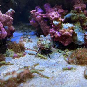 【新潟・親子旅③】身近な魚を知ったりヒトデやウニに触れる「マリンピア日本海」