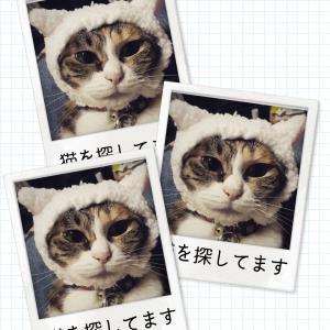 猫の捜索時は市役所にも届け出を!!