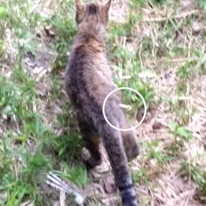 ※緊急シェア拡散希望※足を切断する猫ちゃんがいます