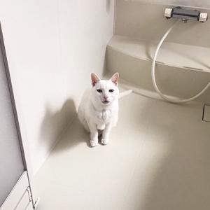 """猫に見えるが""""ふろみたがり""""という恐ろしい妖怪じゃ 「うちでもよく現れます」の声多数"""