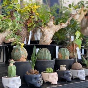 ボタニカルはブームからカルチャーへ。植物好きによる植物好きのためのイベントNEVERLAND TOKYOが開催されました。