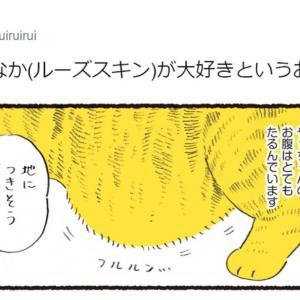 """猫の""""お腹""""への熱い想い描いた漫画に共感の嵐 「触りたい眺めたい」「うちの子も見て」"""