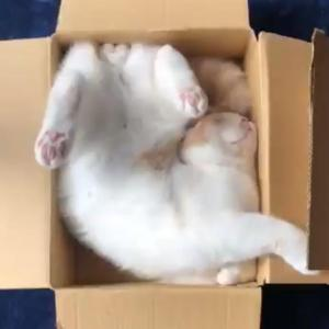 猫が「こんなところで寝てた」 動画ツイートに「どうしてそうなった」「アクロバティック寝」 驚きの声
