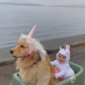 犬と人間だけどまるで兄妹 ユニコーン姿で一緒にドライブしちゃうんです