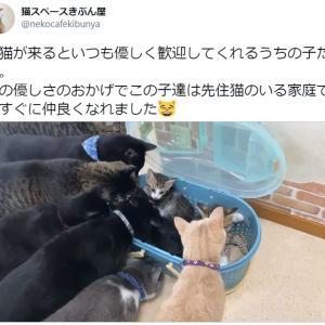 新入り子猫をみっちり囲んで大歓迎! 優しさいっぱいの猫動画に2.6万いいね