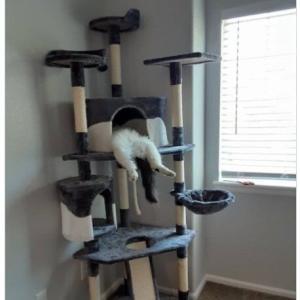 ものすごい寝相で爆睡するネコ 「飲みすぎた日の朝3時」「ネコを愛すべき理由のひとつがこれ」