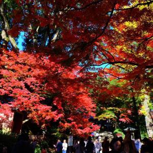【子連れお出かけ】佐賀★大興善寺(つつじ寺) 11月真っ赤な紅葉と猿まわし