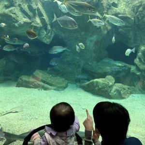 【子連れおでかけ】山口県☆下関海響館 1歳!初めての水族館!お魚に興味津々♪