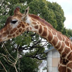 【大牟田市動物園へ子連れおでかけ】飼育員さんの愛が伝わる!可愛い動物がいっぱい!