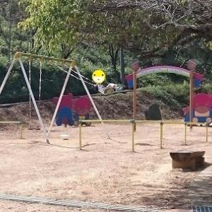 どんぐりのために神社と公園をはしご(≧▽≦)