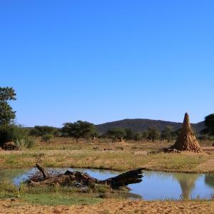 セーブル アンテロープを見ながらランチ@オコンジマプレーンキャンプ