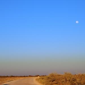 満月の浮かぶ朝、エトーシャ公園でレオパードに遭遇