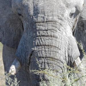 ゾウのアップが撮れた!エトーシャ国立公園をセルフドライブ♪