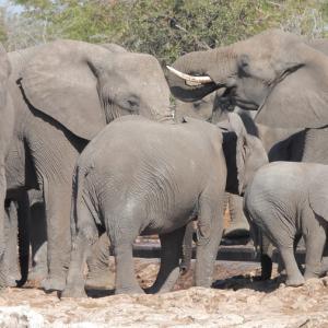 ゾウの大群に遭遇!ナミビアの動物の宝庫エトーシャ国立公園をセルフドライブ