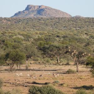 アンジェリーナジョリーが繋げた9000ヘクタールのリザーブ、オマアンダのプールから眺める動物達