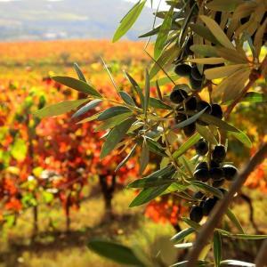 秋色に染まったブドウ畑を歩こう!@シックスセンシズ ドウロバレー
