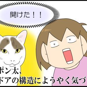 猫のかしこさが3上がった!