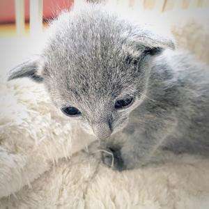 子猫が生まれました!