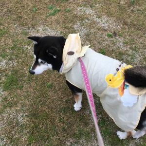 傘はいらない☆マロちゃんの疑問