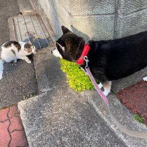 マロちゃんとお散歩☆ユキちゃんの話