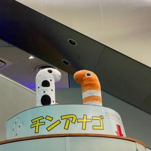 人気のチンアナゴ⭐︎名古屋港水族館
