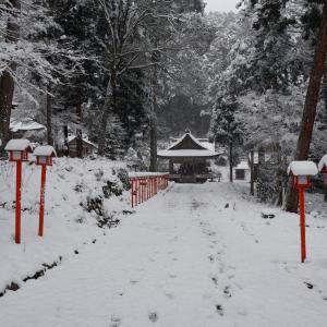 「雪の日吉大社。(坂本さんぽ)」