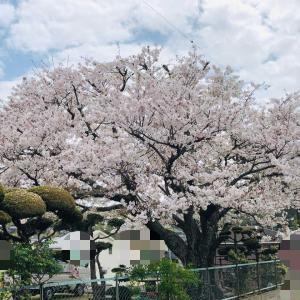 春なのに・・・・