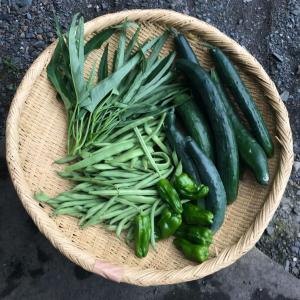 裏の畑の収穫