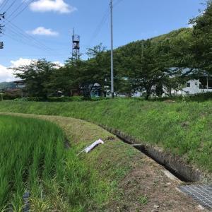 草刈りと除草剤散布