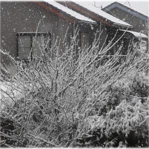 季節外れの大雪と。。
