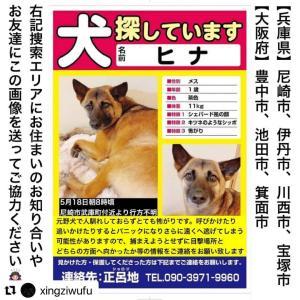 【尼崎市】今福一丁目で迷い犬をみかける