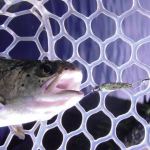 片品川国際鱒釣場さんに釣行しました 釣果は4時間で90匹でした